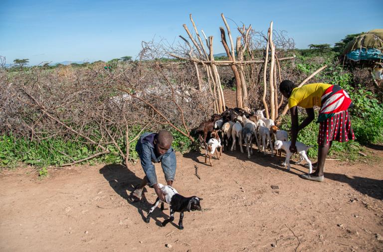 The Damaging Impact of Locust Plagues on Pastoralist ...